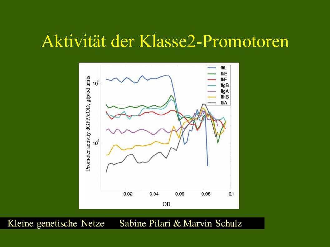 Kleine genetische Netze Sabine Pilari & Marvin Schulz Promotoraktivität von fliL