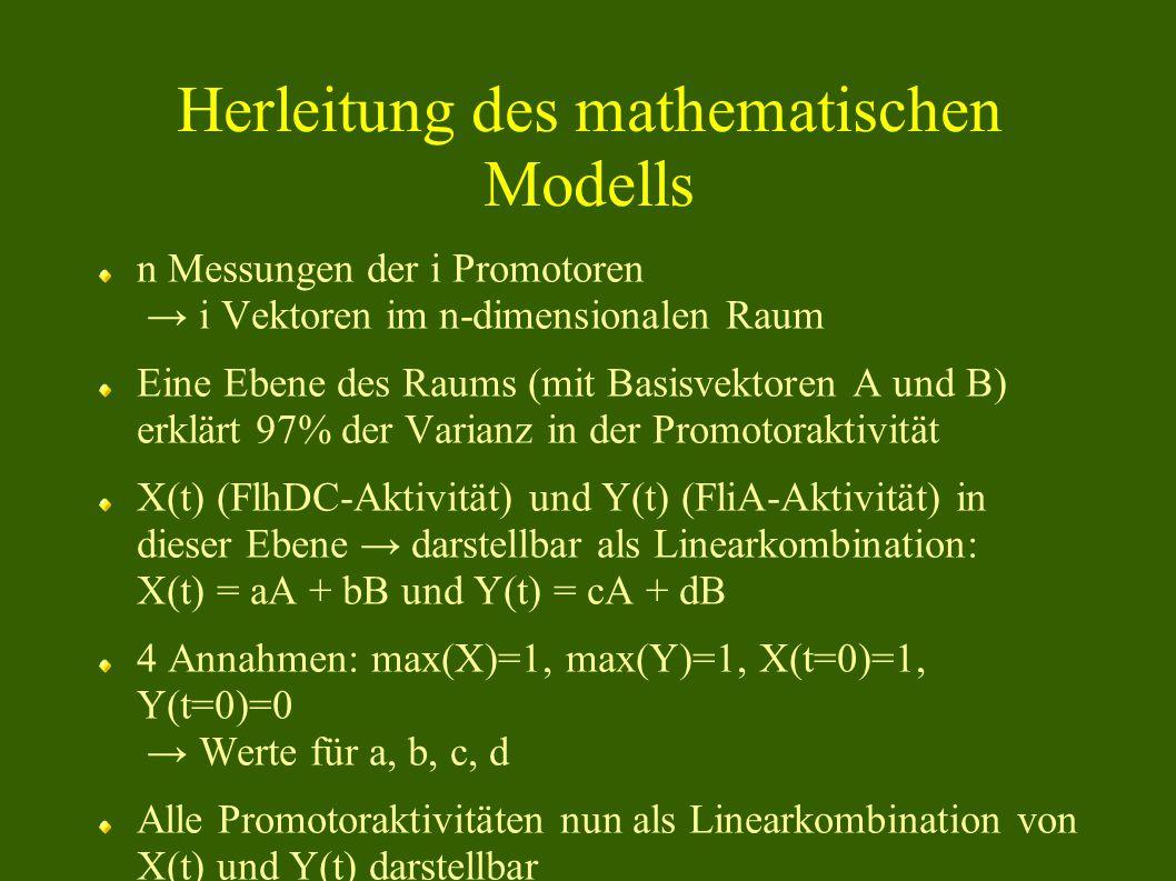 Herleitung des mathematischen Modells n Messungen der i Promotoren → i Vektoren im n-dimensionalen Raum Eine Ebene des Raums (mit Basisvektoren A und B) erklärt 97% der Varianz in der Promotoraktivität X(t) (FlhDC-Aktivität) und Y(t) (FliA-Aktivität) in dieser Ebene → darstellbar als Linearkombination: X(t) = aA + bB und Y(t) = cA + dB 4 Annahmen: max(X)=1, max(Y)=1, X(t=0)=1, Y(t=0)=0 → Werte für a, b, c, d Alle Promotoraktivitäten nun als Linearkombination von X(t) und Y(t) darstellbar