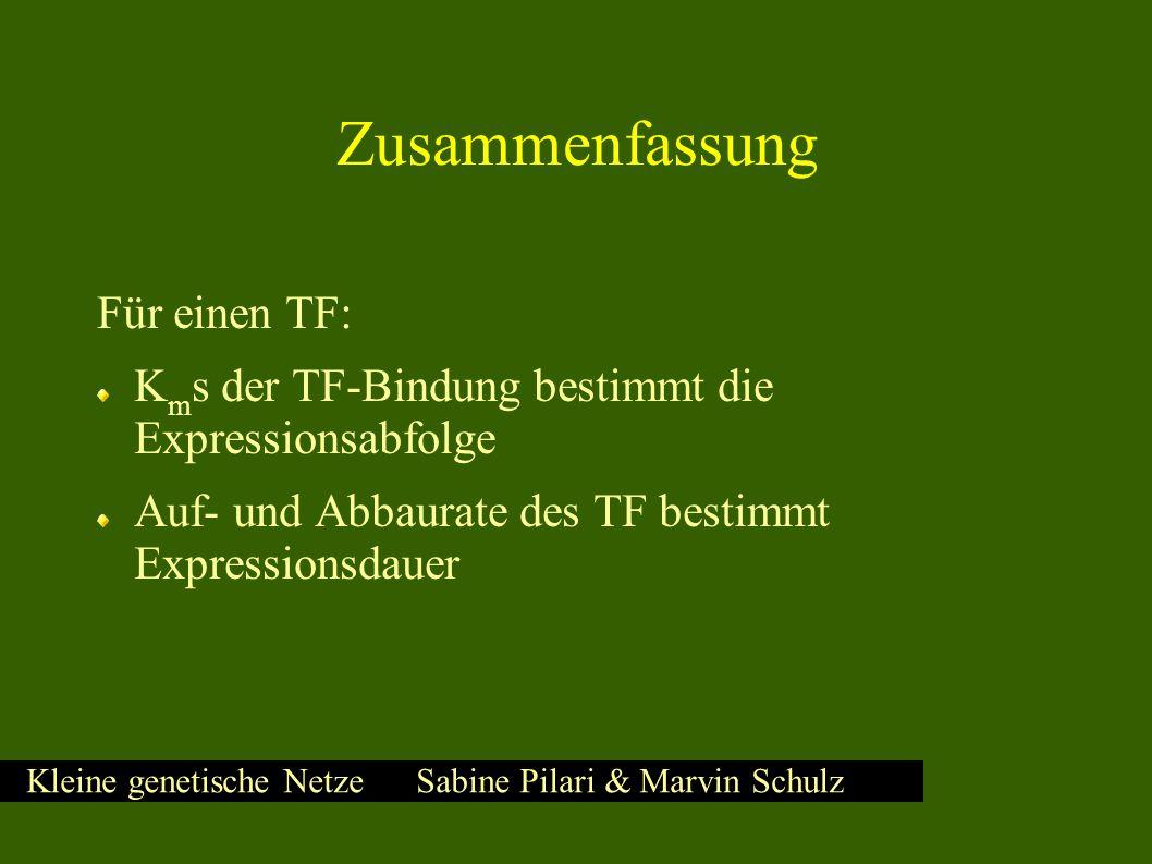 Kleine genetische Netze Sabine Pilari & Marvin Schulz Zusammenfassung Für einen TF: K m s der TF-Bindung bestimmt die Expressionsabfolge Auf- und Abbaurate des TF bestimmt Expressionsdauer