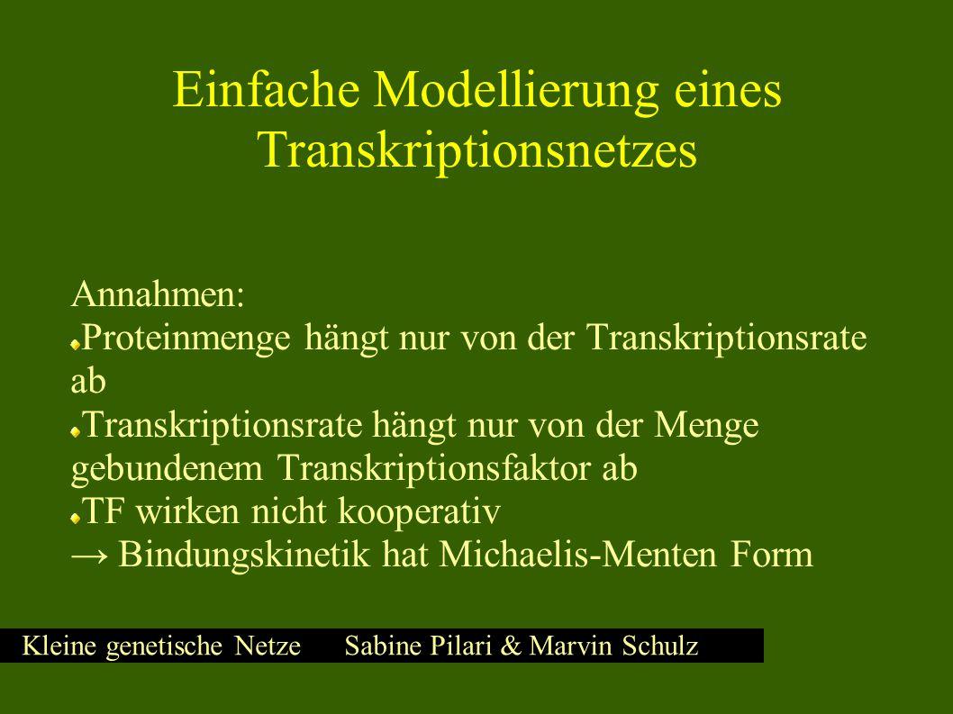 Kleine genetische Netze Sabine Pilari & Marvin Schulz Einfache Modellierung eines Transkriptionsnetzes Annahmen: Proteinmenge hängt nur von der Transkriptionsrate ab Transkriptionsrate hängt nur von der Menge gebundenem Transkriptionsfaktor ab TF wirken nicht kooperativ → Bindungskinetik hat Michaelis-Menten Form