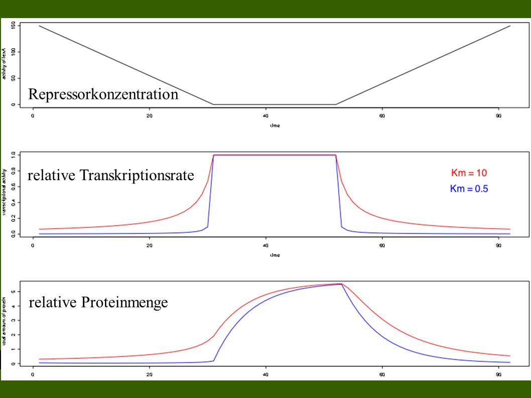 Repressorkonzentration relative Transkriptionsrate relative Proteinmenge
