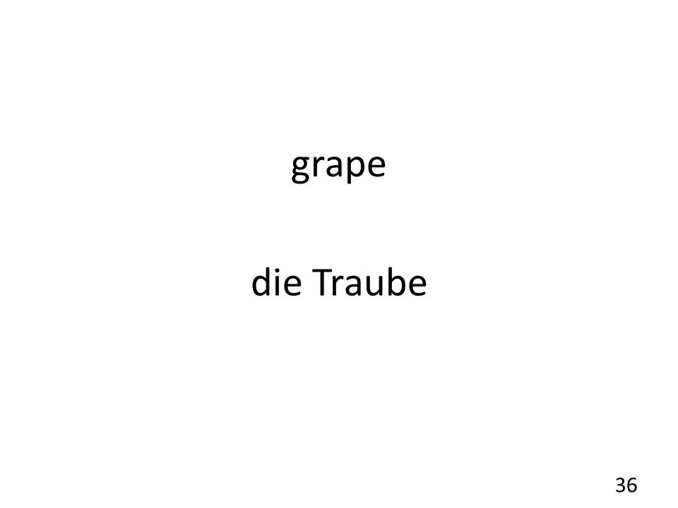 grape die Traube 36