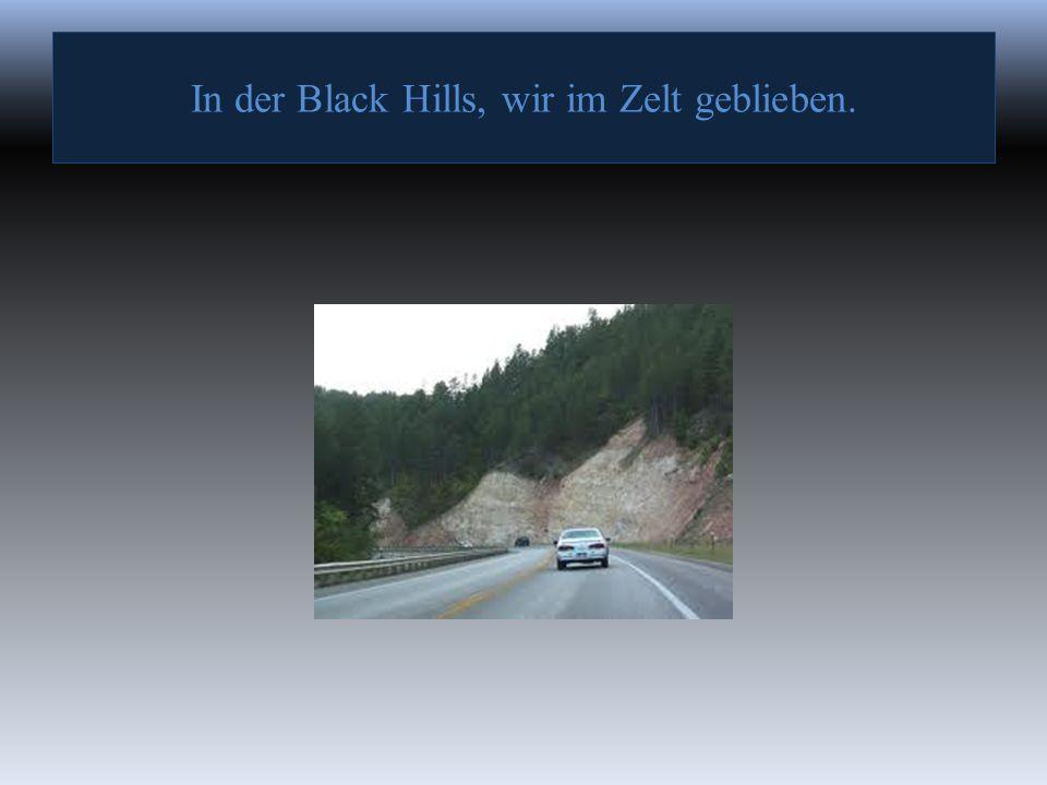 In der Black Hills, wir haben die Büffel gefilmt.