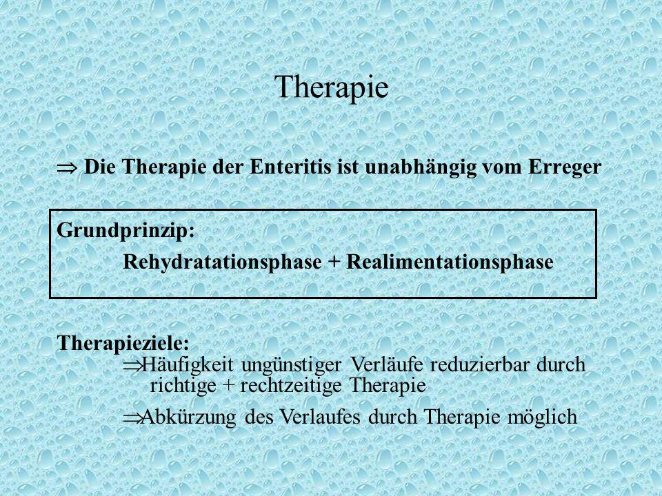 Therapie  Die Therapie der Enteritis ist unabhängig vom Erreger Grundprinzip: Rehydratationsphase + Realimentationsphase Therapieziele:  Häufigkeit ungünstiger Verläufe reduzierbar durch richtige + rechtzeitige Therapie  Abkürzung des Verlaufes durch Therapie möglich