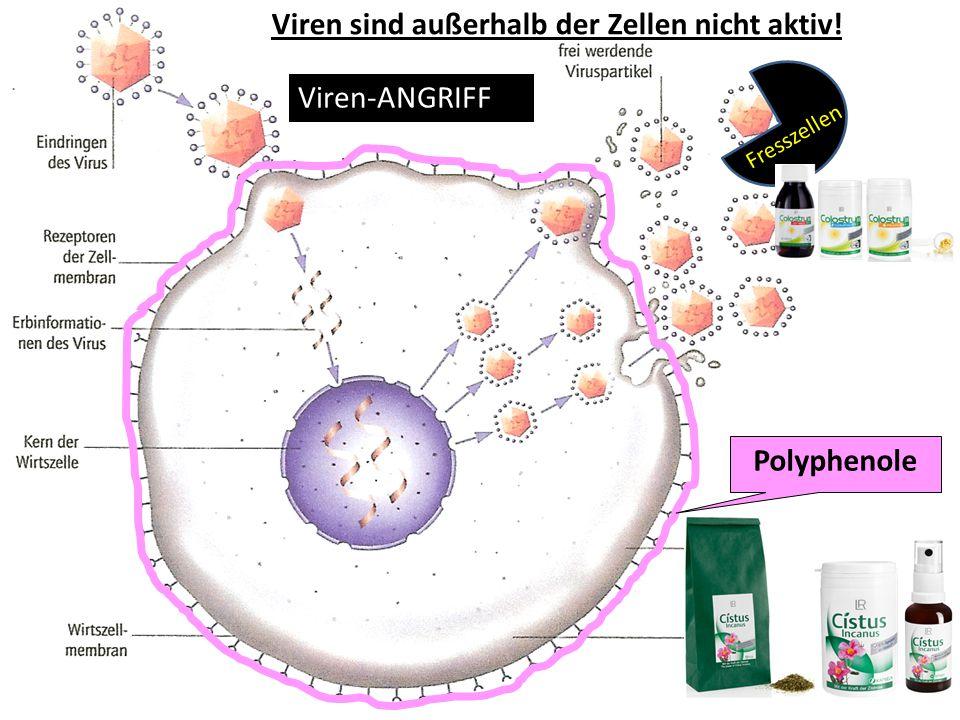 Viren sind außerhalb der Zellen nicht aktiv! Polyphenole Fresszellen Viren-ANGRIFF