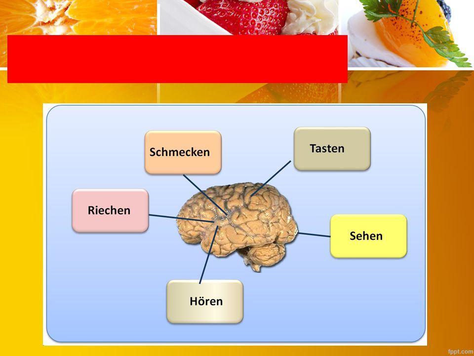 Geruch und Geschmack Form TN (ein Vertreter aus der Gruppe) tasten im Sack eine Obst-Gemüseart, erkennen sie und bringen sie in die Gruppe.