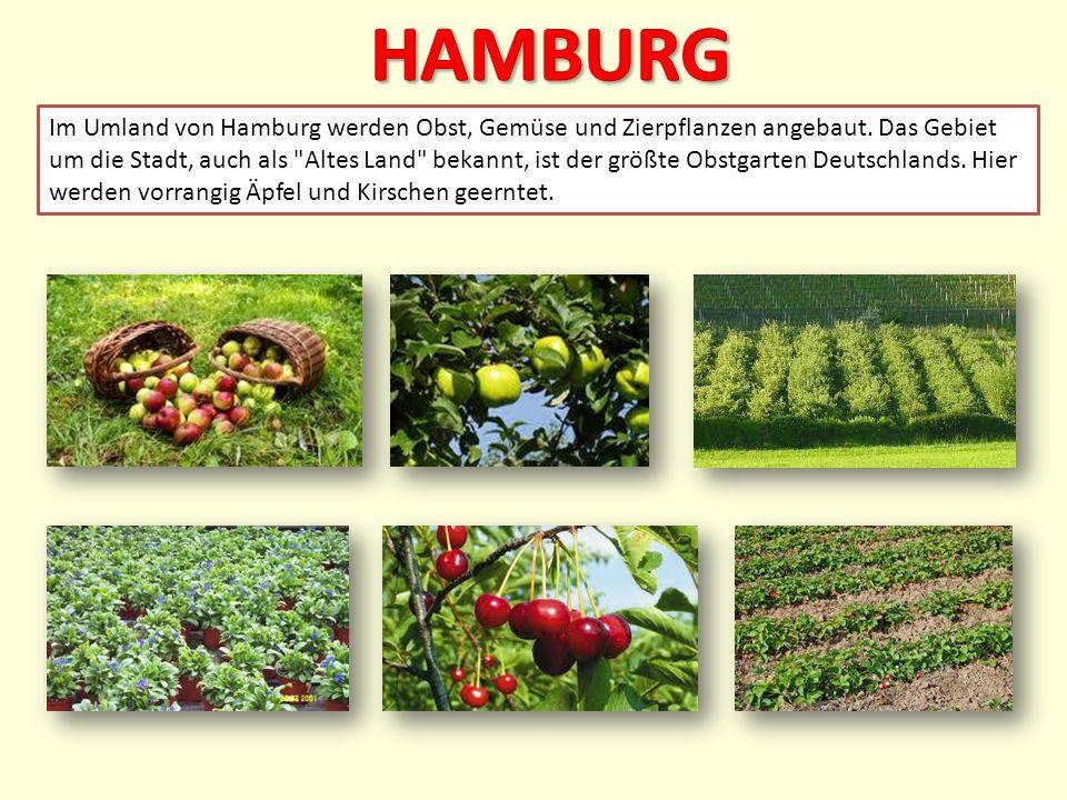 Im Umland von Hamburg werden Obst, Gemüse und Zierpflanzen angebaut. Das Gebiet um die Stadt, auch als