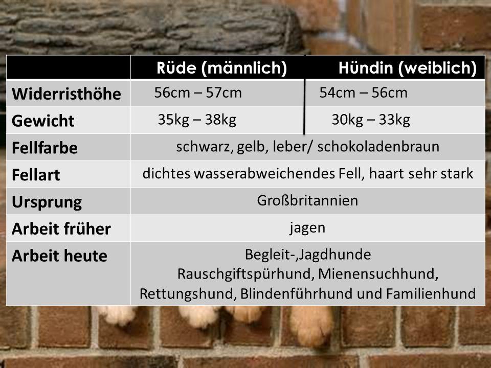 Rüde (männlich) Hündin (weiblich) Widerristhöhe 56cm – 57cm 54cm – 56cm Gewicht 35kg – 38kg 30kg – 33kg Fellfarbe schwarz, gelb, leber/ schokoladenbra