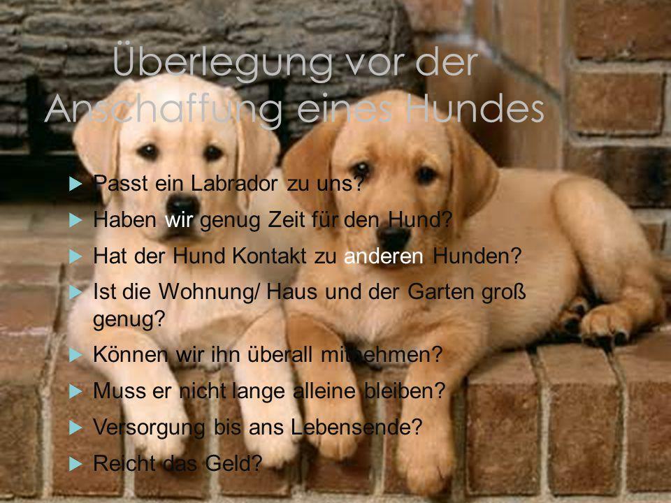 Überlegung vor der Anschaffung eines Hundes  Passt ein Labrador zu uns?  Haben wir genug Zeit für den Hund?  Hat der Hund Kontakt zu anderen Hunden