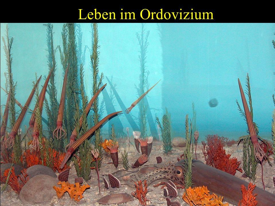 Leben im Ordovizium