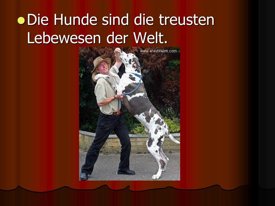 Die Hunde sind die treusten Lebewesen der Welt. Die Hunde sind die treusten Lebewesen der Welt.