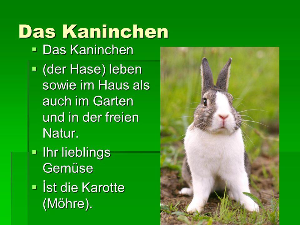 Das Kaninchen  Das Kaninchen  (der Hase) leben sowie im Haus als auch im Garten und in der freien Natur.