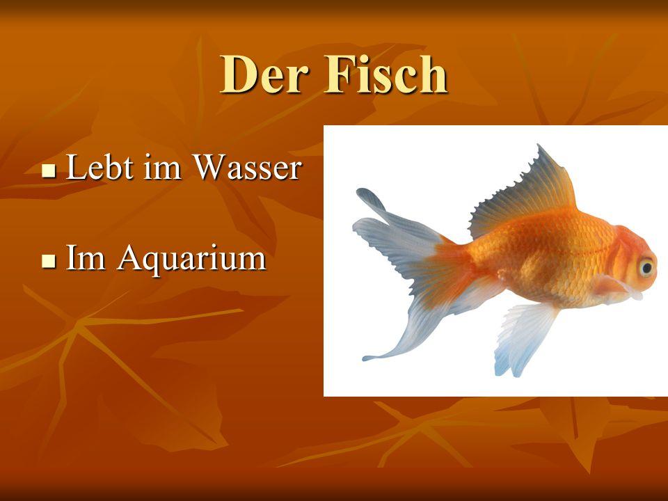Der Fisch Lebt im Wasser Lebt im Wasser Im Aquarium Im Aquarium