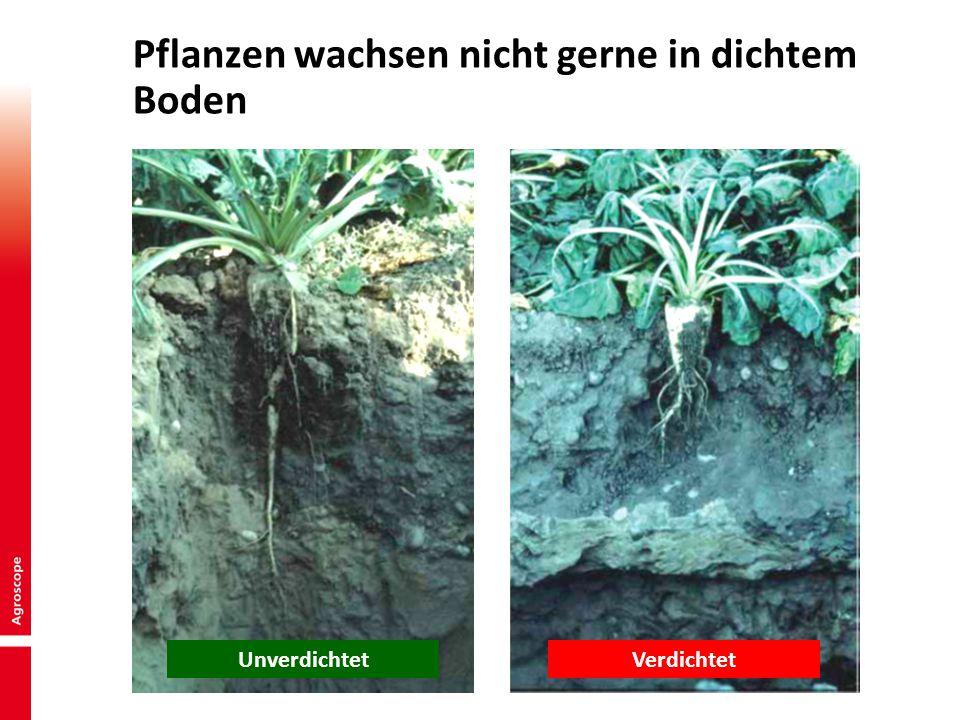5 Pflanzen wachsen nicht gerne in dichtem Boden VerdichtetUnverdichtet