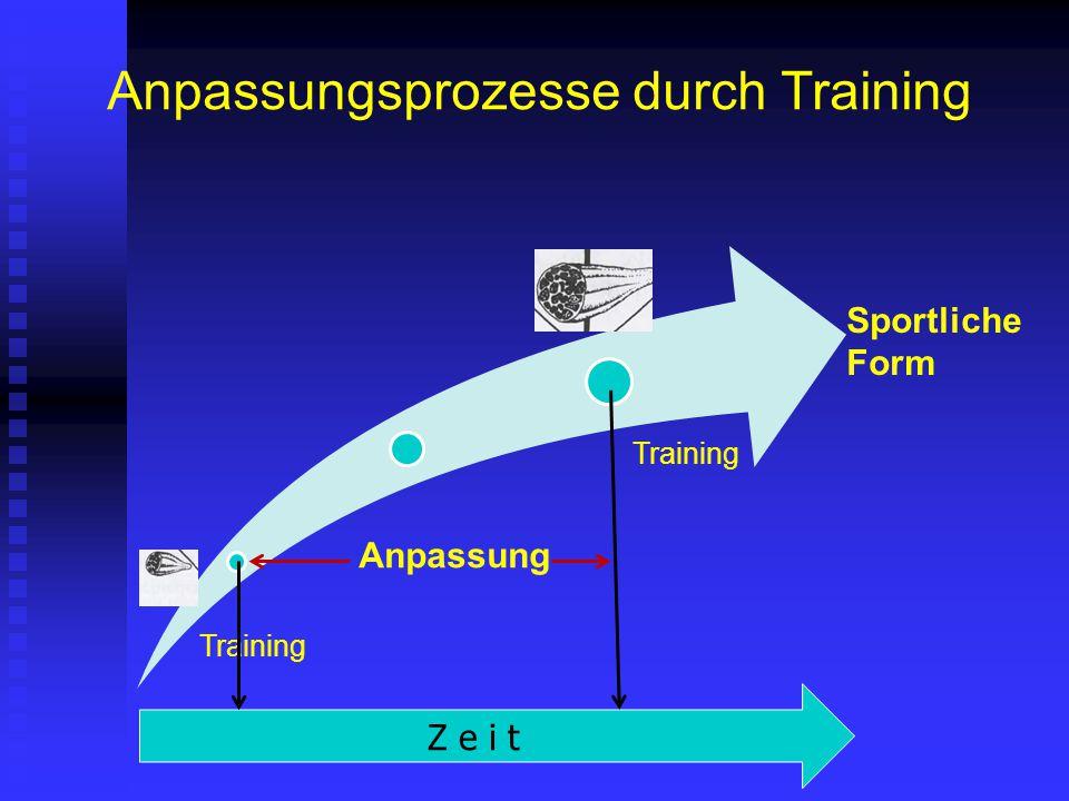 Anpassungsprozesse durch Training Sportliche Form Training Anpassung Training Z e i t