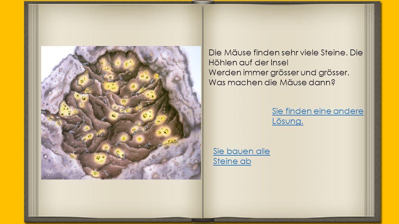 Die Mäuse finden sehr viele Steine. Die Höhlen auf der Insel Werden immer grösser und grösser. Was machen die Mäuse dann? Sie bauen alle Steine ab Sie
