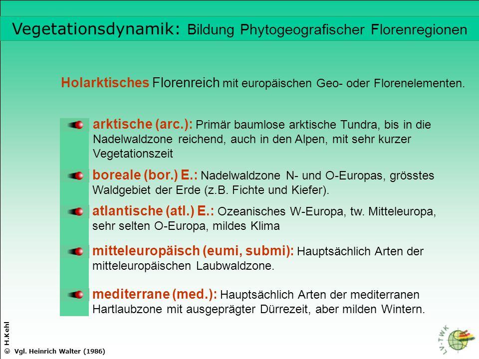 © H.Kehl Holarktisches Florenreich mit europäischen Geo- oder Florenelementen. arktische (arc.): Primär baumlose arktische Tundra, bis in die Nadelwal