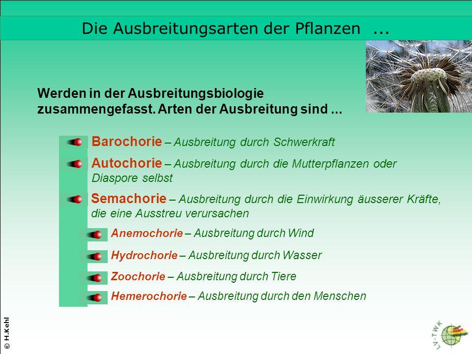 © H.Kehl Semachorie – Ausbreitung durch die Einwirkung äusserer Kräfte, die eine Ausstreu verursachen Autochorie – Ausbreitung durch die Mutterpflanze