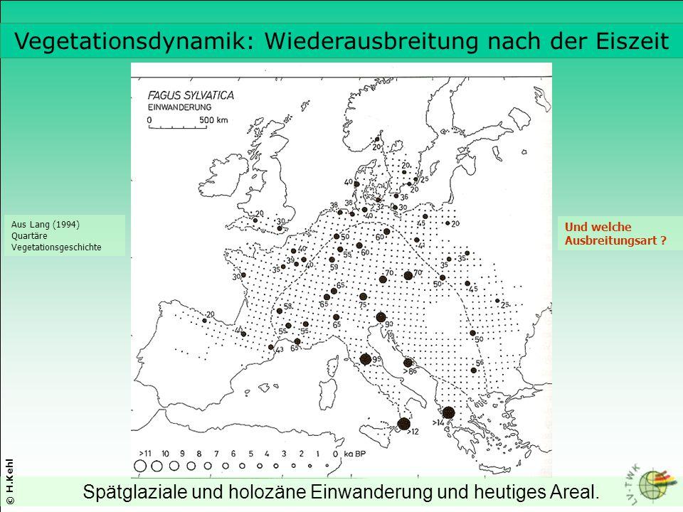 Spätglaziale und holozäne Einwanderung und heutiges Areal. Aus Lang (1994) Quartäre Vegetationsgeschichte © H.Kehl Und welche Ausbreitungsart ? Vegeta