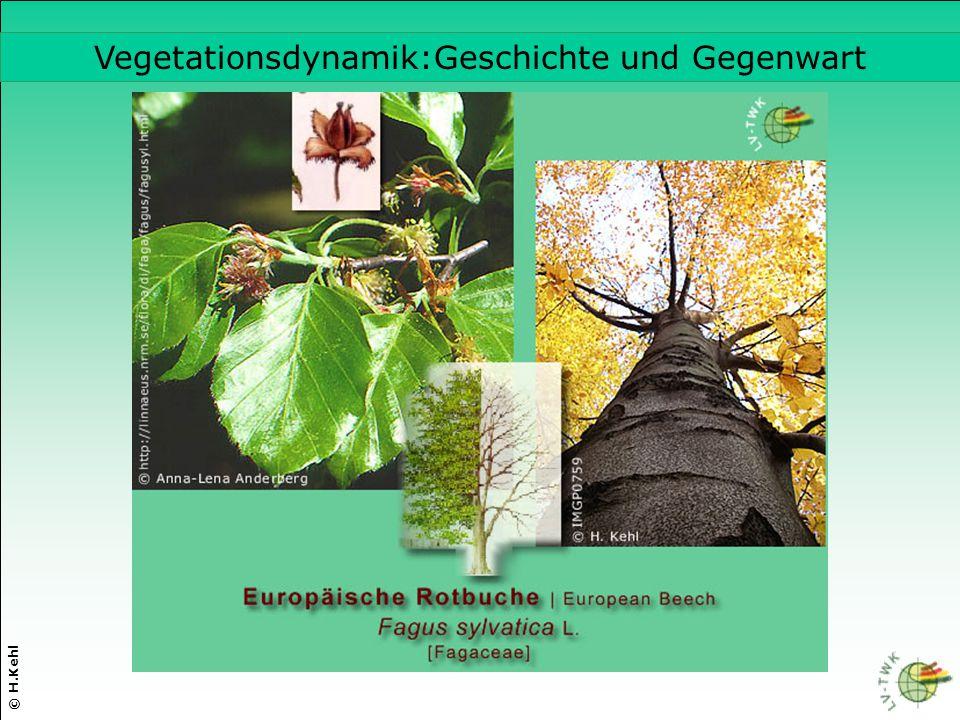 © H.Kehl Vegetationsdynamik:Geschichte und Gegenwart