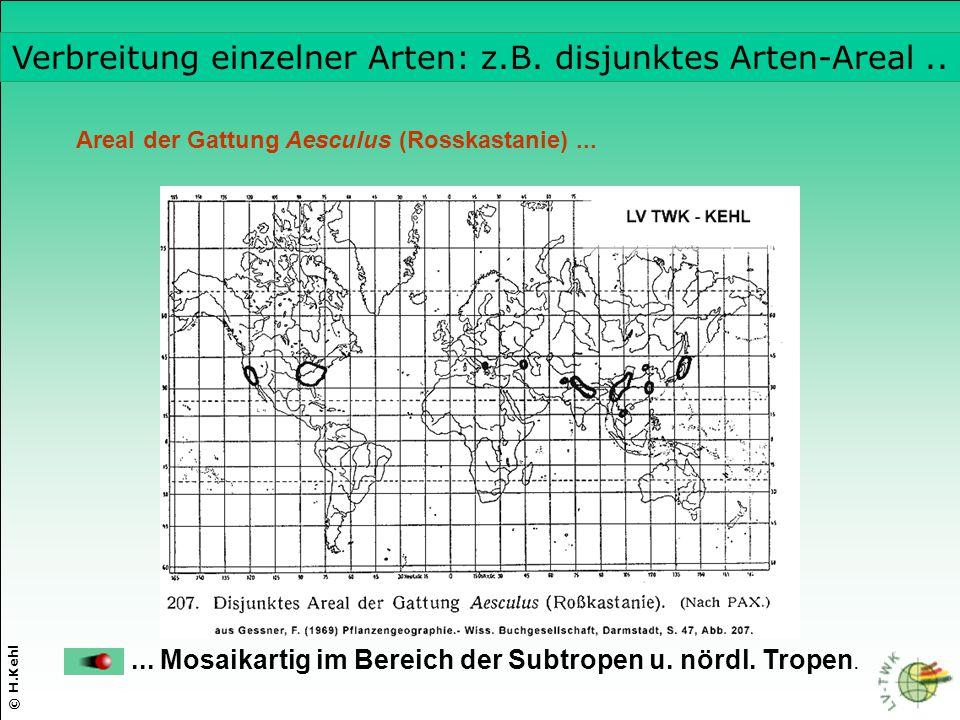© H.Kehl Areal der Gattung Aesculus (Rosskastanie)...... Mosaikartig im Bereich der Subtropen u. nördl. Tropen. Verbreitung einzelner Arten: z.B. disj