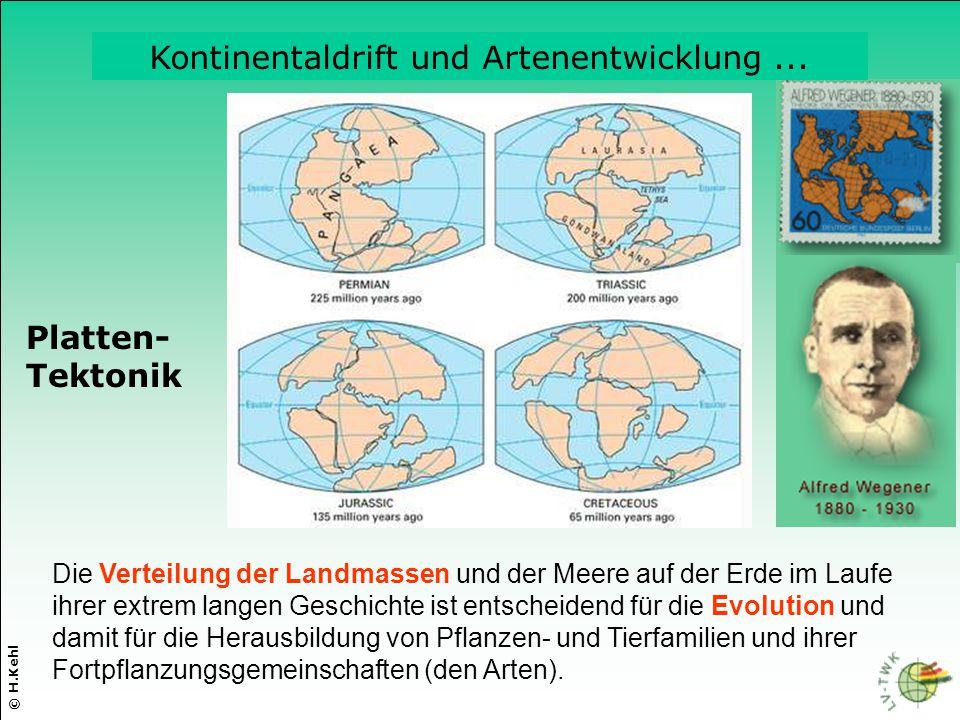 Die Verteilung der Landmassen und der Meere auf der Erde im Laufe ihrer extrem langen Geschichte ist entscheidend für die Evolution und damit für die