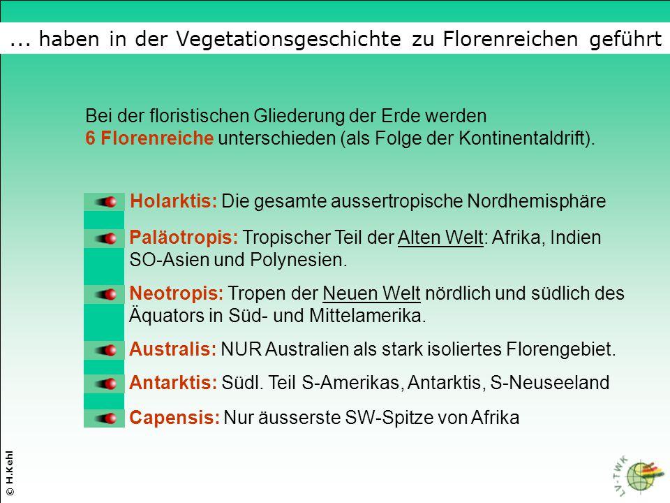 Bei der floristischen Gliederung der Erde werden 6 Florenreiche unterschieden (als Folge der Kontinentaldrift). © H.Kehl... haben in der Vegetationsge