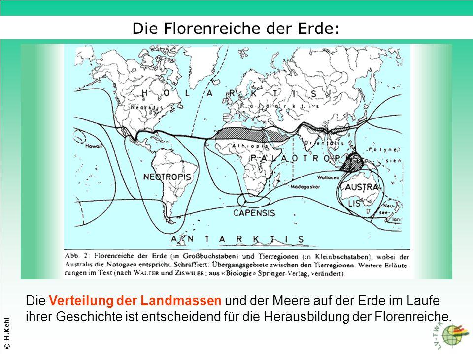 Die Verteilung der Landmassen und der Meere auf der Erde im Laufe ihrer Geschichte ist entscheidend für die Herausbildung der Florenreiche. © H.Kehl D