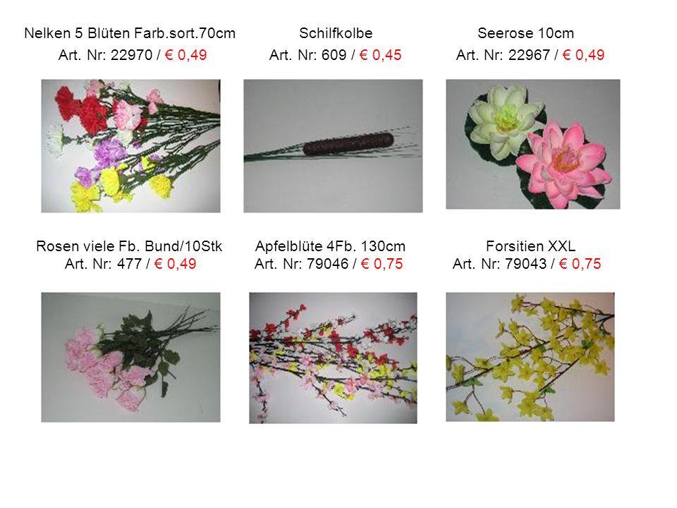 Nelken 5 Blüten Farb.sort.70cm Schilfkolbe Seerose 10cm Art. Nr: 22970 / € 0,49 Art. Nr: 609 / € 0,45 Art. Nr: 22967 / € 0,49 Rosen viele Fb. Bund/10S