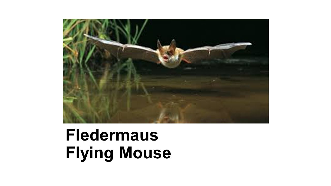 Fledermaus Flying Mouse