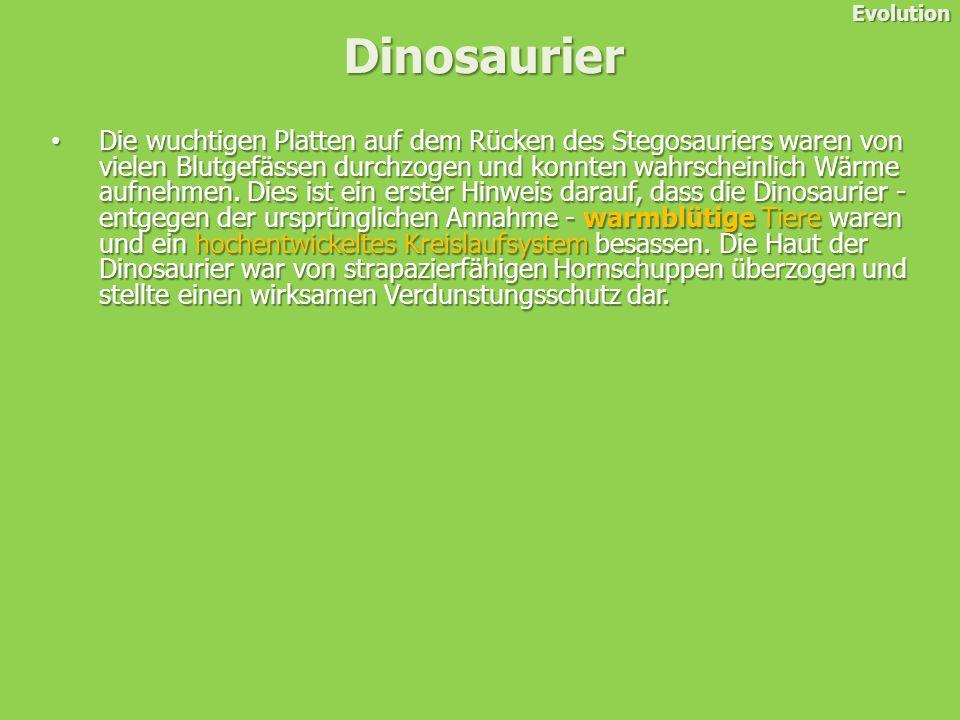 Die wuchtigen Platten auf dem Rücken des Stegosauriers waren von vielen Blutgefässen durchzogen und konnten wahrscheinlich Wärme aufnehmen.