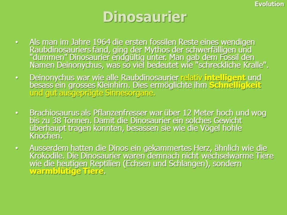 Als man im Jahre 1964 die ersten fossilen Reste eines wendigen Raubdinosauriers fand, ging der Mythos der schwerfälligen und dummen Dinosaurier endgültig unter.