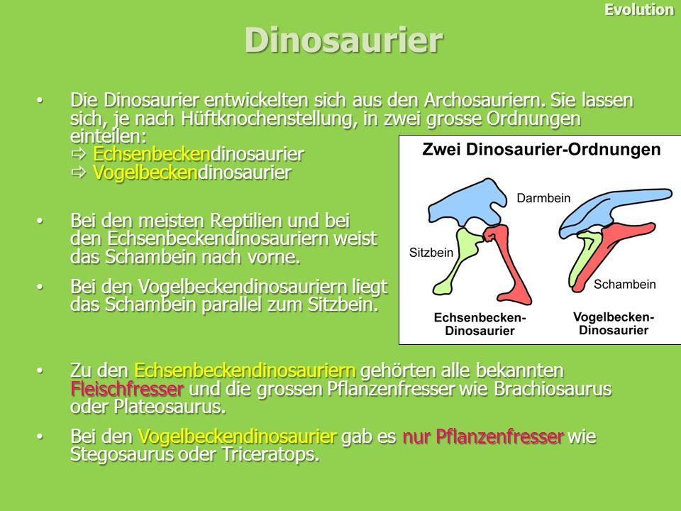 Die Dinosaurier entwickelten sich aus den Archosauriern.