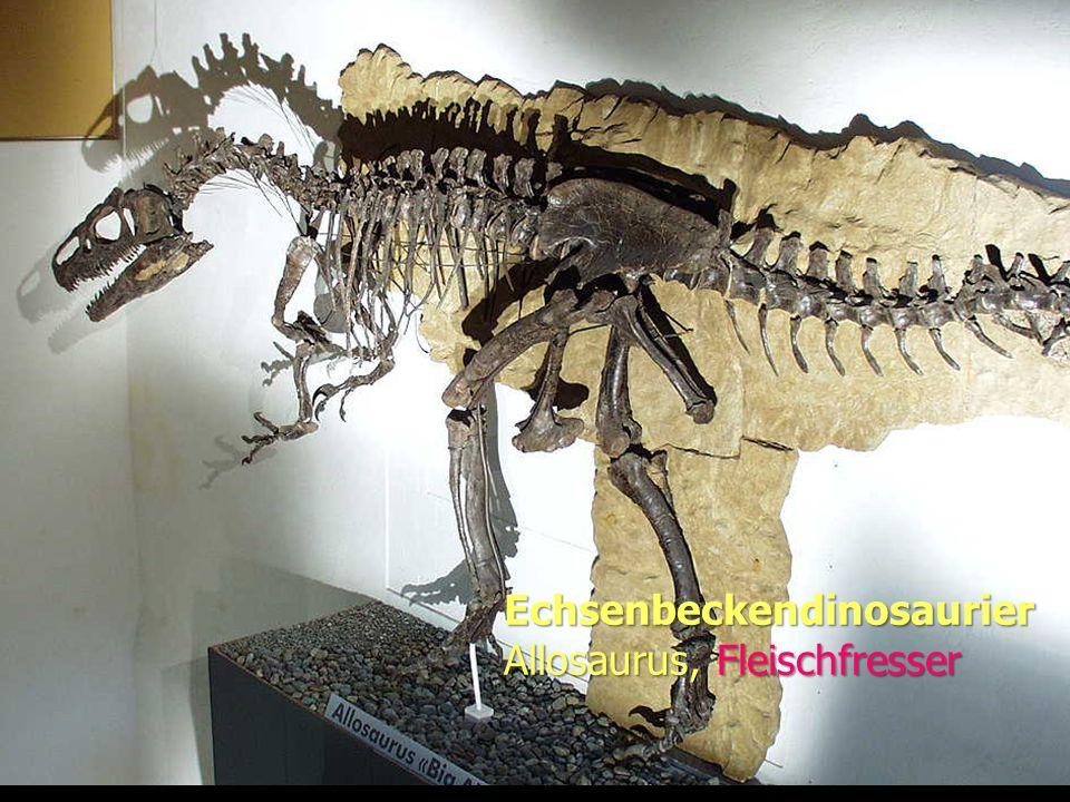 Evolution Echsenbeckendinosaurier Allosaurus, Fleischfresser