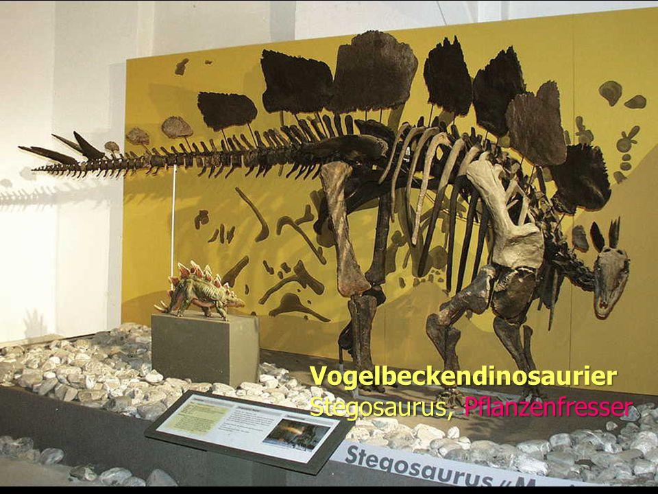 Evolution Vogelbeckendinosaurier Stegosaurus, Pflanzenfresser