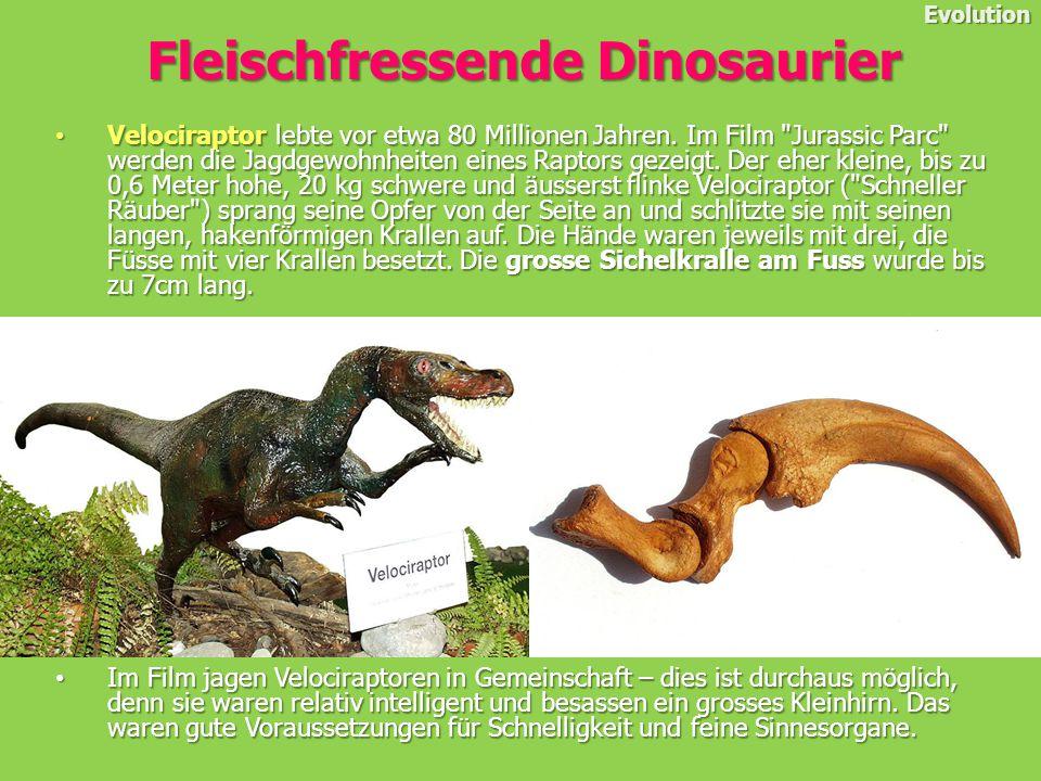 Velociraptor lebte vor etwa 80 Millionen Jahren.