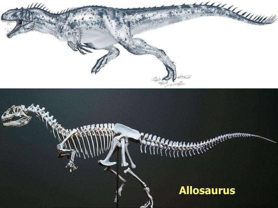 Evolution Allosaurus