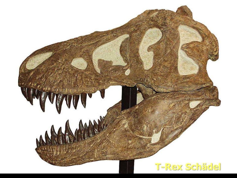 Evolution T-Rex Schädel