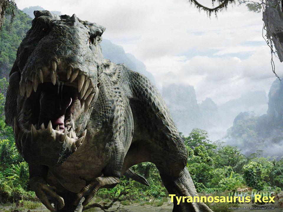 Evolution Tyrannosaurus Rex