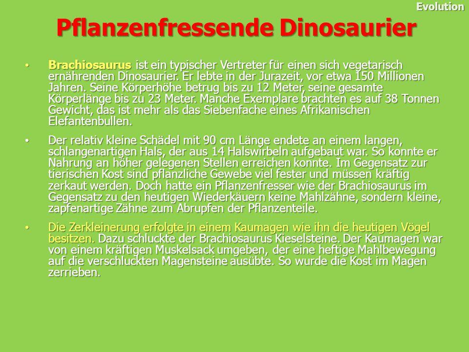 Pflanzenfressende Dinosaurier Evolution Brachiosaurus ist ein typischer Vertreter für einen sich vegetarisch ernährenden Dinosaurier.