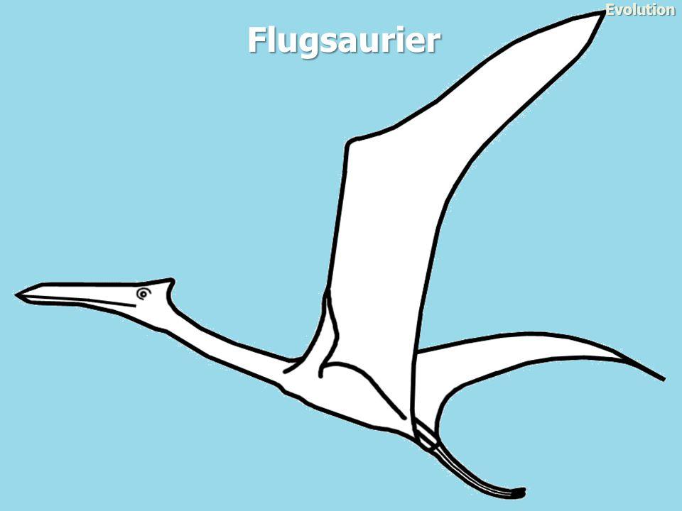 Flugsaurier Evolution