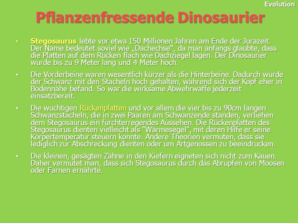 Evolution Stegosaurus lebte vor etwa 150 Millionen Jahren am Ende der Jurazeit.