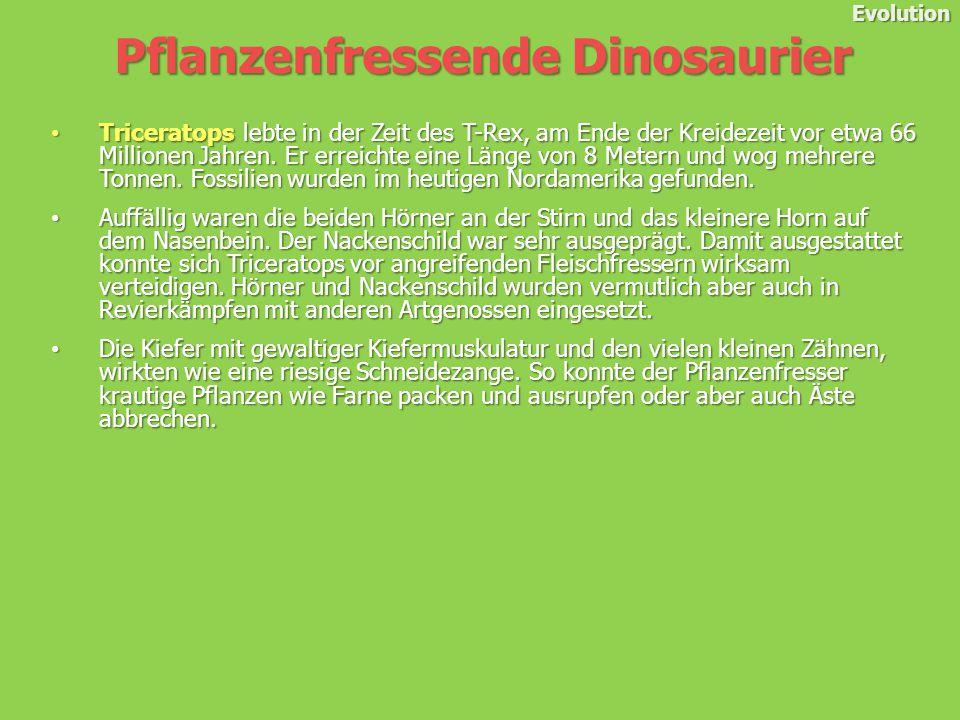Evolution Triceratops lebte in der Zeit des T-Rex, am Ende der Kreidezeit vor etwa 66 Millionen Jahren.