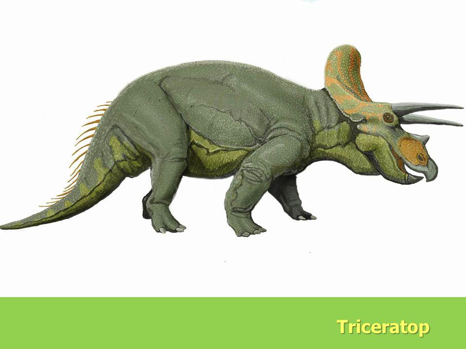 Evolution Triceratop