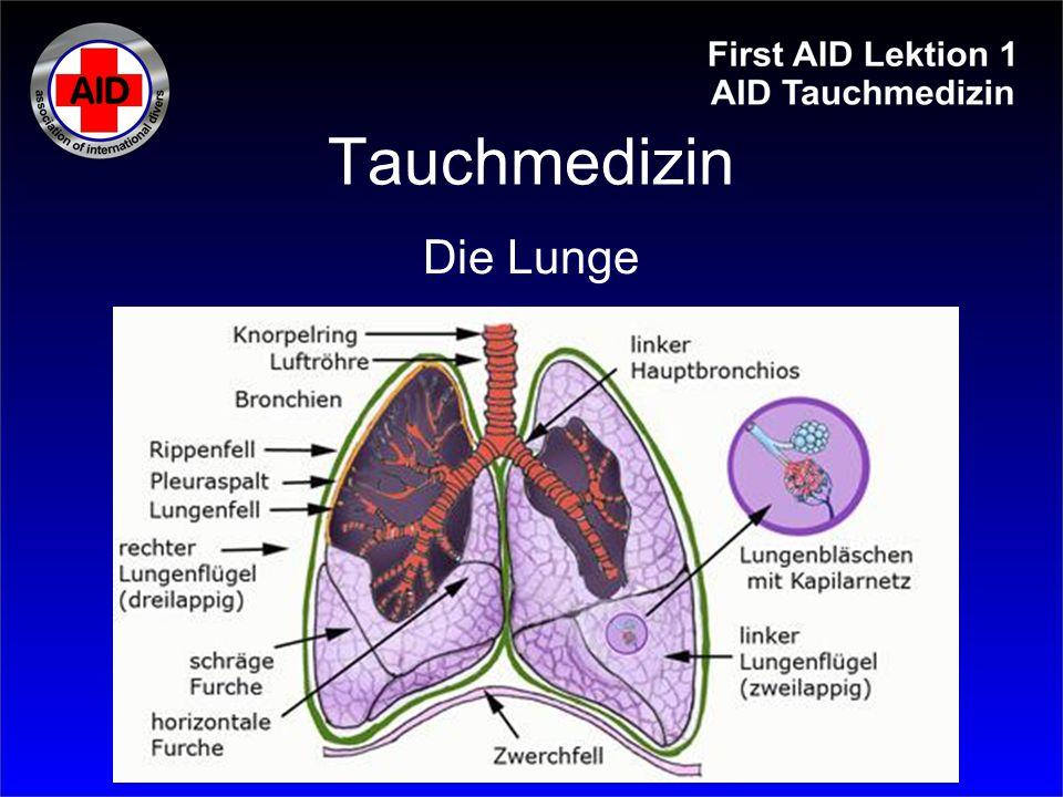 Tauchmedizin Die Lunge