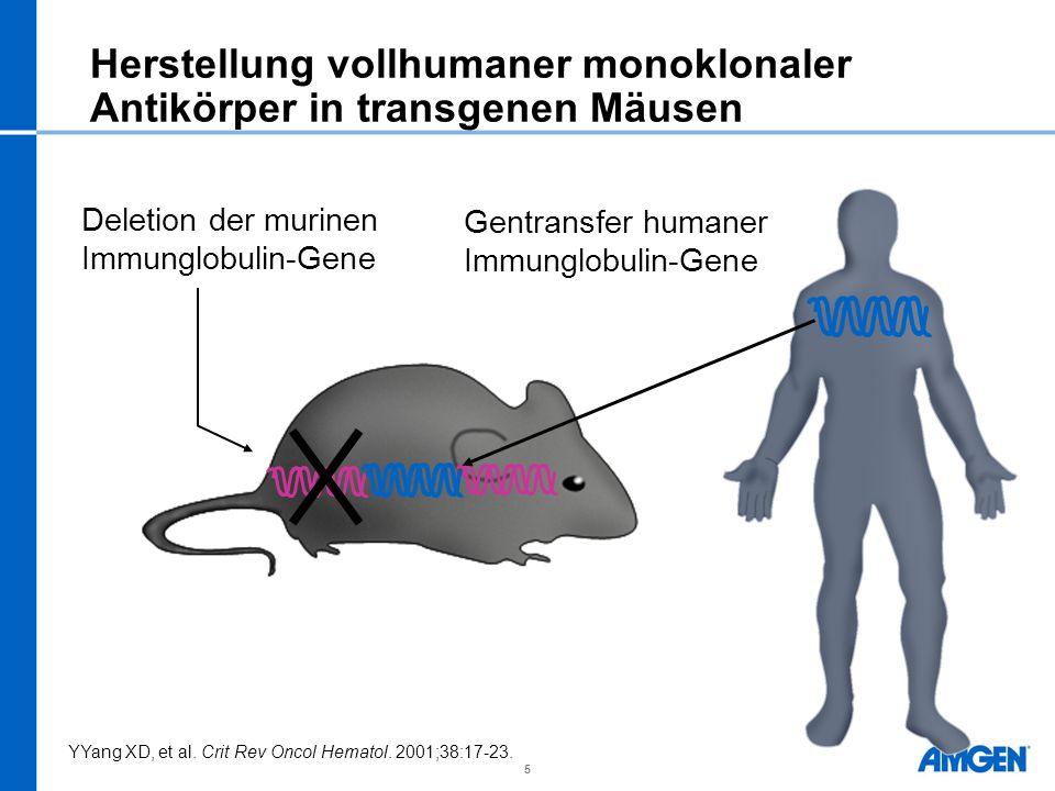 5 Herstellung vollhumaner monoklonaler Antikörper in transgenen Mäusen Mouse antibody genes inactivated Human antibody genes introduced YYang XD, et a