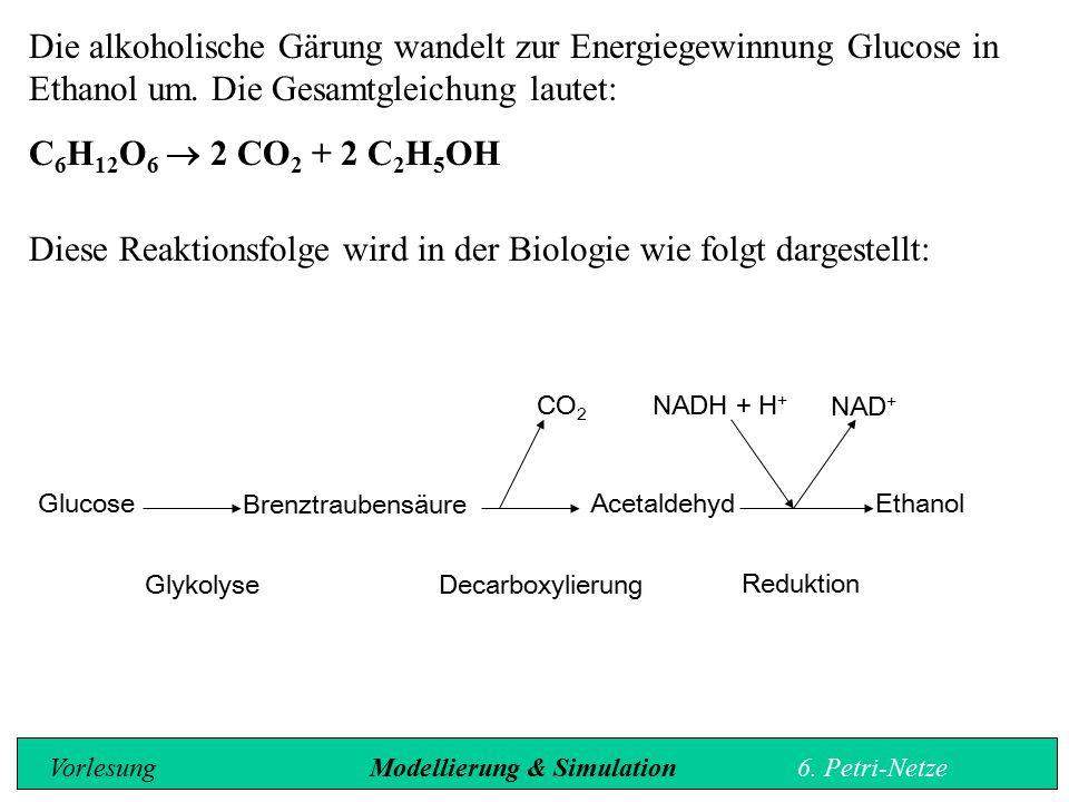 Die alkoholische Gärung wandelt zur Energiegewinnung Glucose in Ethanol um.