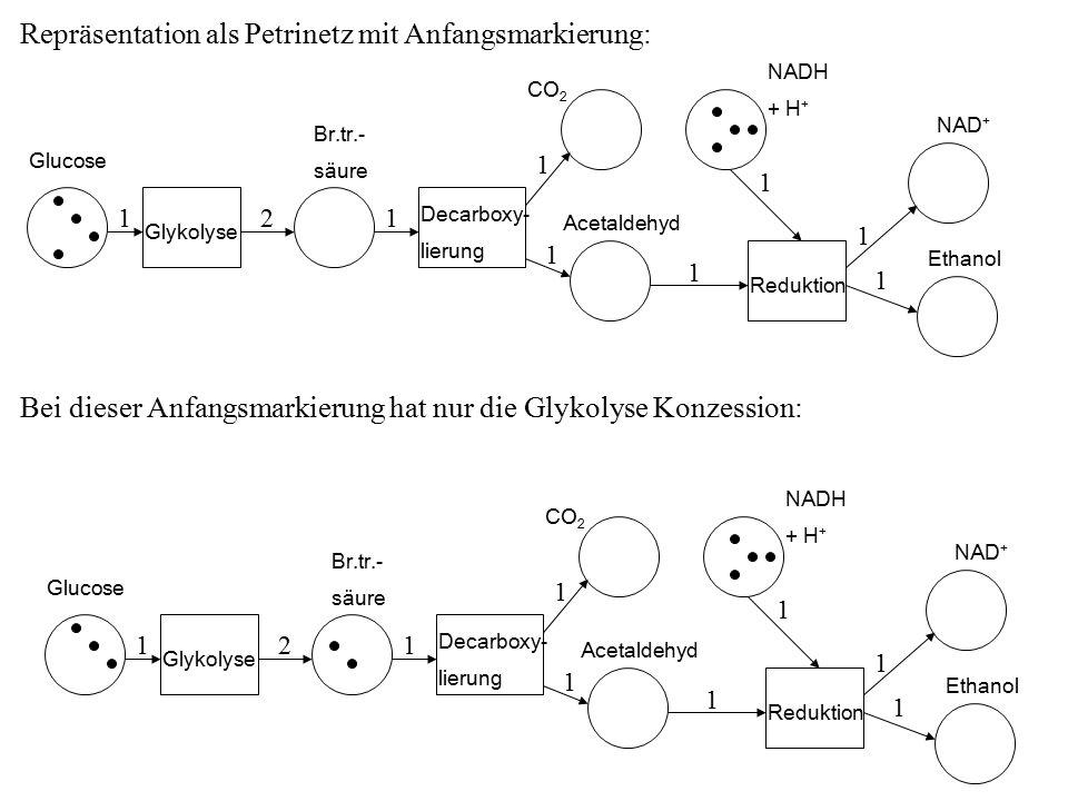 Repräsentation als Petrinetz mit Anfangsmarkierung: Glucose Glykolyse Br.tr.- säure Decarboxy- lierung CO 2 Acetaldehyd Reduktion NADH + H + NAD + Ethanol 211 1 1 1 1 1 1 Glucose Glykolyse Br.tr.- säure Decarboxy- lierung CO 2 Acetaldehyd Reduktion NADH + H + NAD + Ethanol 211 1 1 1 1 1 1 Bei dieser Anfangsmarkierung hat nur die Glykolyse Konzession: