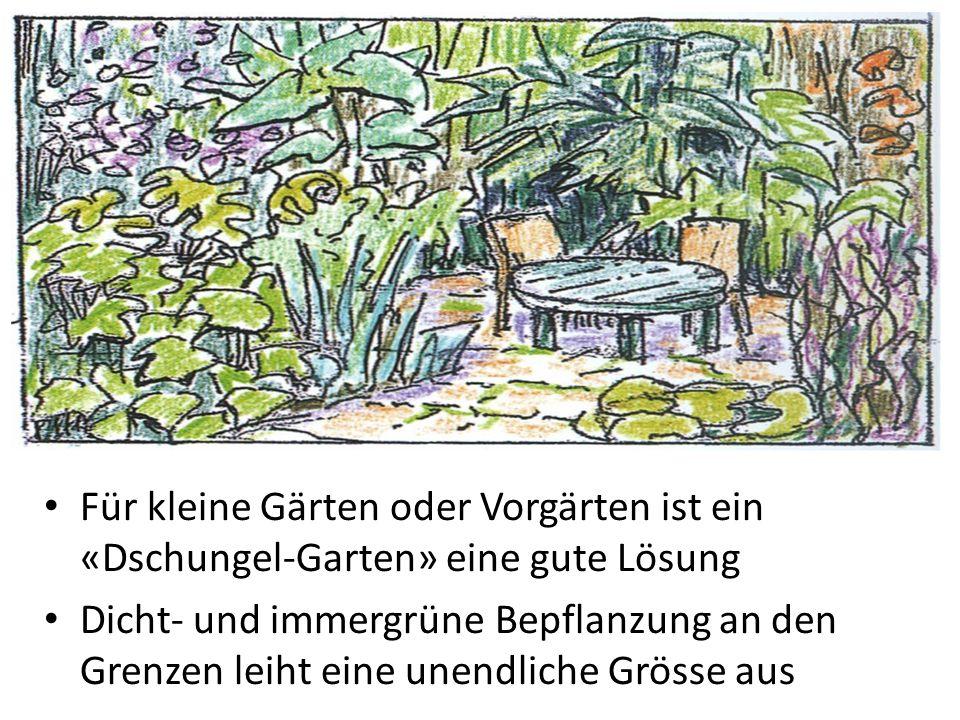 Für kleine Gärten oder Vorgärten ist ein «Dschungel-Garten» eine gute Lösung Dicht- und immergrüne Bepflanzung an den Grenzen leiht eine unendliche Gr