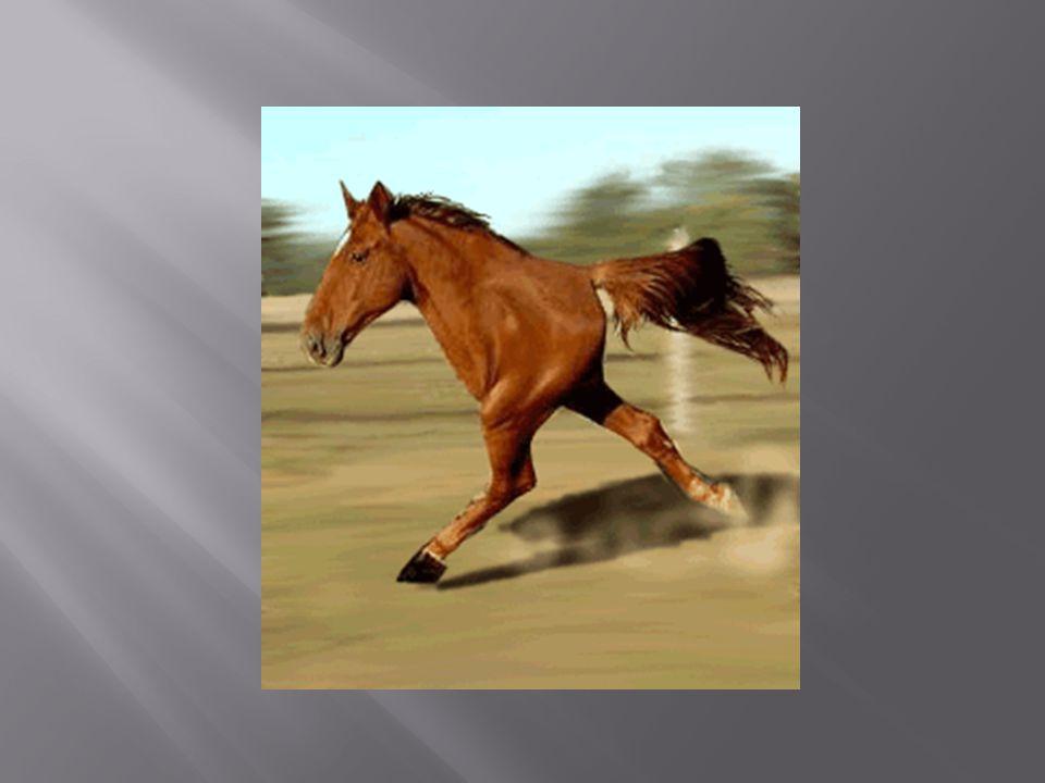 Symptom 3: Beim Anzeigen von Bildern und Video-Clips geschehen merkwürdige Dinge auf dem Bildschirm.